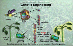 genetic modification of plants essay major drawbacks of the plant genetic engineering