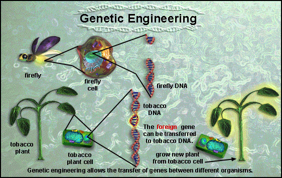 Genetic Engineering 2 Lahore Grammar School